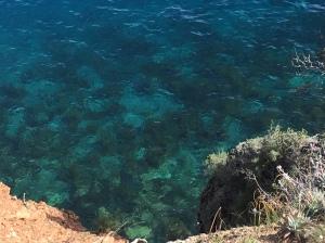 Monet Kelp Forest. photo by Bruce McGlynn
